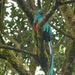 Biotopo del Quetzal Mario Dary Rivera, Baja Verapáz Guatemala