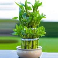 5 piante da interni, ideali anche in ambienti poco luminosi