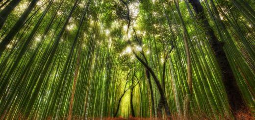 bosque-bambu-1