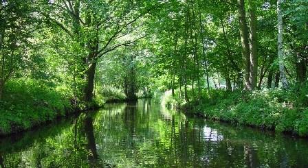 Bosque de Spree