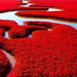 Red-Seabeach-Panjin-China-4
