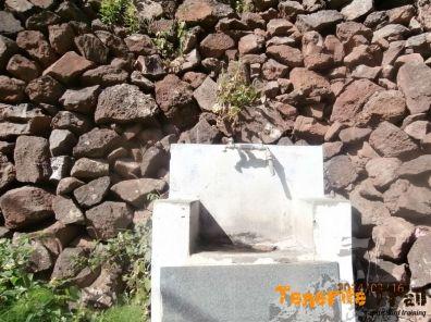 Grifo en el barranco de Valleseco