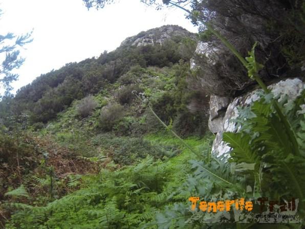 Sendero al inicio ascenso a Roque Negro (ojo posible vegetación época del año)