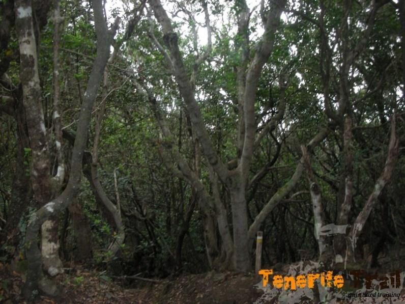 Cruce de senderos viene el Chamorga-Benijo