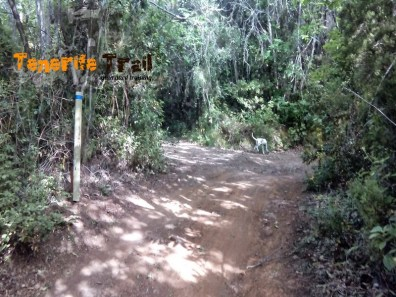 Camino de La Arenita (foto 5)