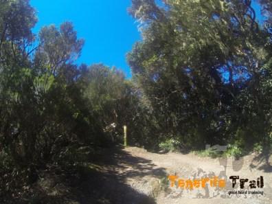 Confluencia con el PR TF 2 que va a Pico del Inglés tiramos hacía la izquierda descendiendo