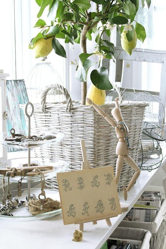 Come coltivare gli agrumi in casa guida giardino for Coltivare limoni