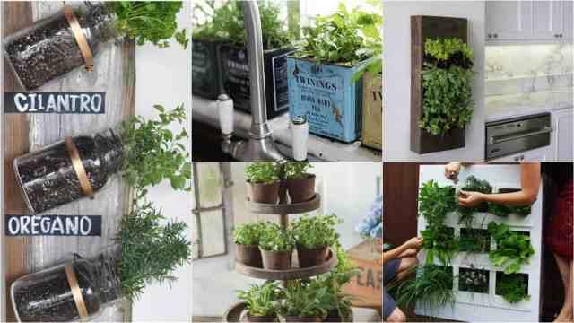 15 modi per coltivare le erbe aromatiche in casa guida - Porta piante aromatiche ...