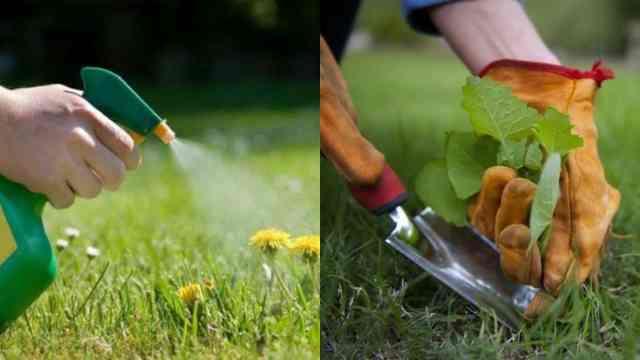 Come utilizzare l aceto per eliminare le erbacce guida for Diserbante per erbacce