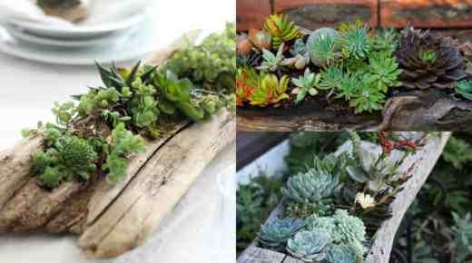Decorazioni verdi: un tronco di succulente