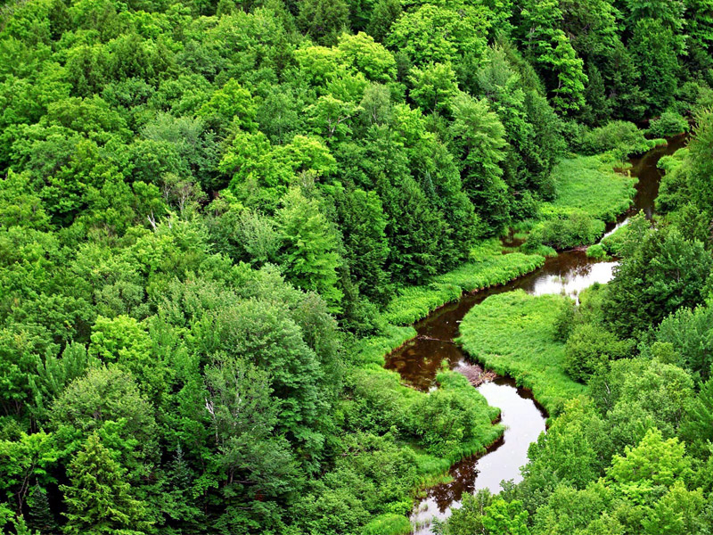Tata Cara Permohonan Izin Usaha Pemanfaatan Hasil Hutan Kayu (IUPHHK)