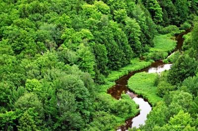 hutan regulasi