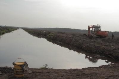 Apakah Tanah Plasma Harus Dari Areal Penggunaan Lain