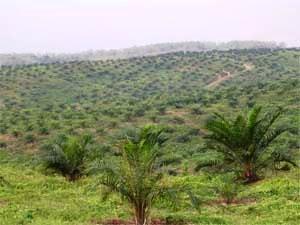 Tata Cara Perubahan Luas Lahan, Jenis Tanaman, Dan Atau Perubahan Kapasitas Pengolahan, Serta Diversifikasi Usaha Perkebunan Kelapa Sawit