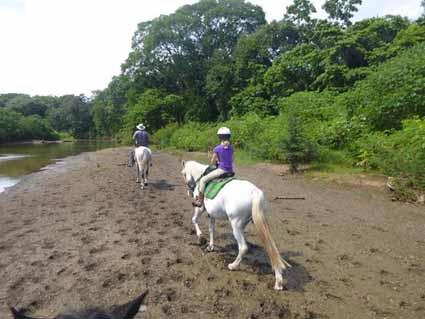 Horseback Ride along the Nosara River