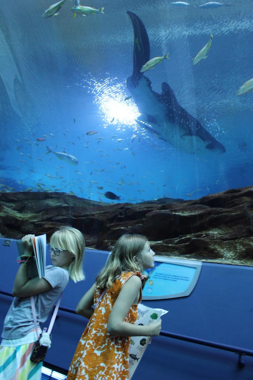 aquarium-sketching