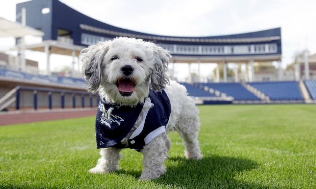 Hank the stray dog is the Brewers' new mascot