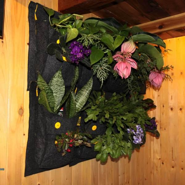 Une fois les plantes installées 2