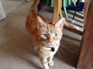 Cat Sitter Newcastle