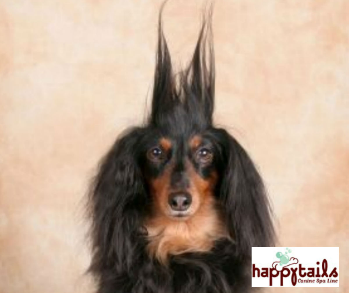 Picture Longhaireddog Dogs Are Dog How To Save Hundreds At Groomers Ruff Ideas Long Haired Dogs Small Long Haired Dog Breeds bark post Long Haired Dog