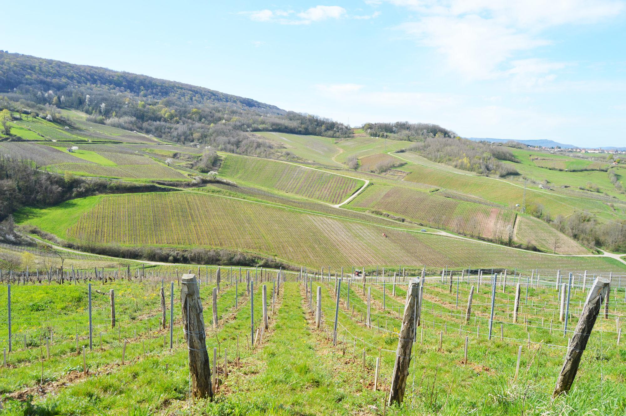 Jura Vineyard Terroir