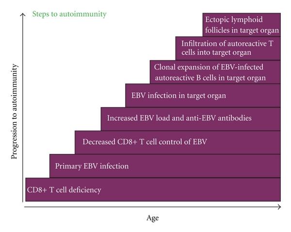 Steps to Autoimmunity