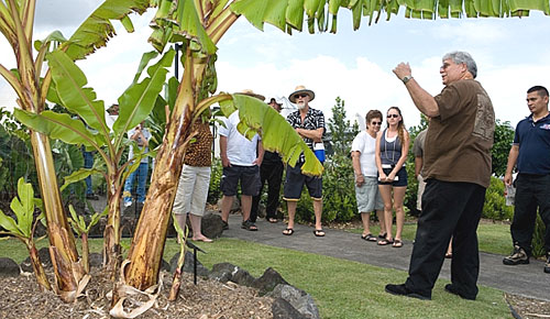 people looking at banana tree