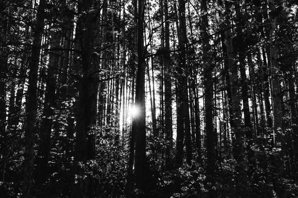 Sun shining through trees - black and white. Choosing to sing brings light into darkness.