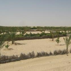 croissance de la palmeraie