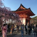 Kyoto, in pictures