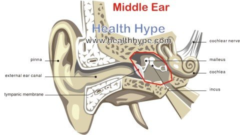 ruptured eardrum whooshing sound mayo clinic, ask a doctor about, Skeleton