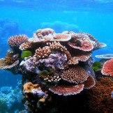 coraloutcrop