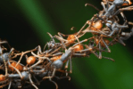 Networks-Decoding the amazing algorithm of ants