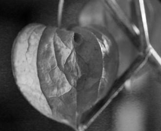 heartoftheart