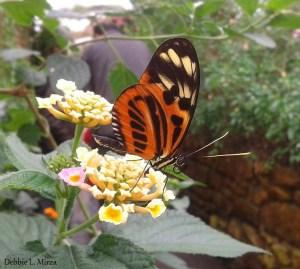 Garden Butterfly on flower