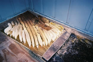Bees' honeycomb undershed requires removal of flooring.