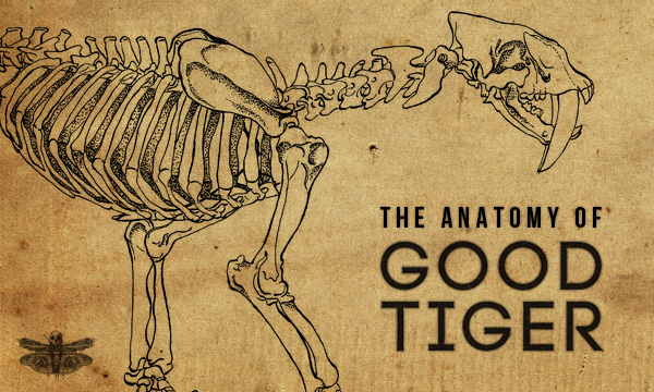 the anatomy of good tiger