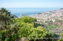 Spain, Gran Canaria, Portugal, Tenerife & other parts