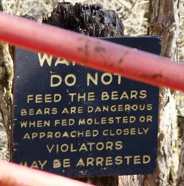 Circle G Ranch bears