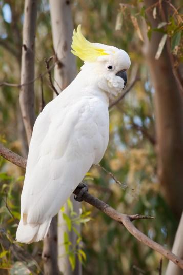 bird shop hendersonville