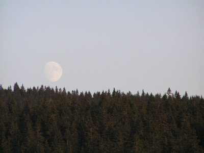 foret lune