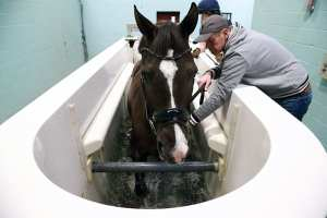 Valegro with supergroom Alan Davies alongside, working in the water treadmill at Hartpury.