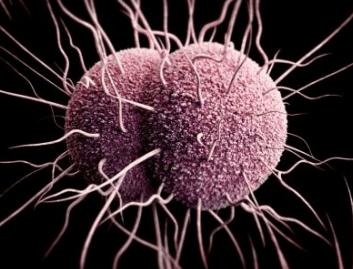 Strain of Gonorrhea