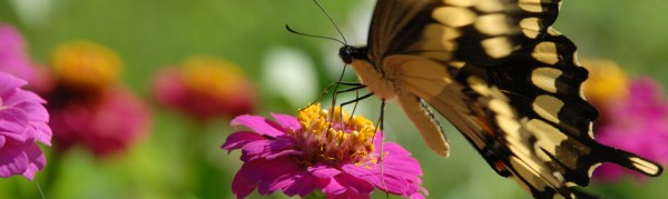butterfly_banner_960x272