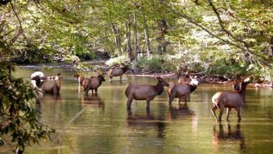 oconaluftee-elk-river-great-smoky-mountians-heysmokies
