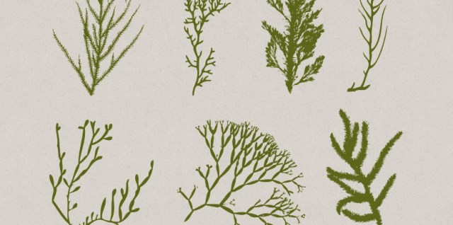 Free download ~ seaweed photoshop brushes ~ courtesy of hgdesigns.co