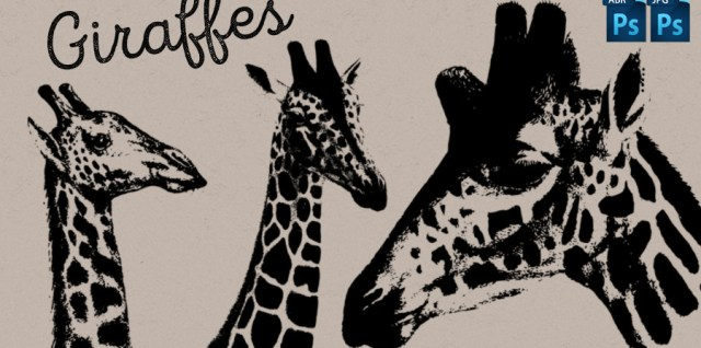 Free download ~ Giraffe photoshop brushes plus jpg image sheet ~ courtesy of hgdesigns.co