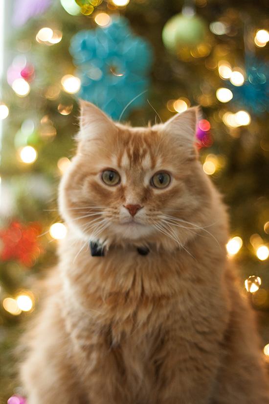 peter-christmas1
