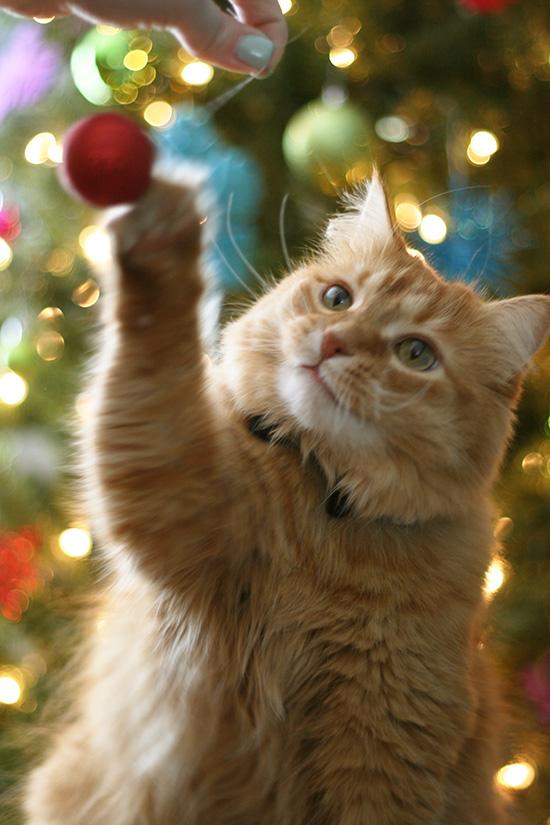 peter-christmas2