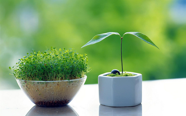 Plantas germinando